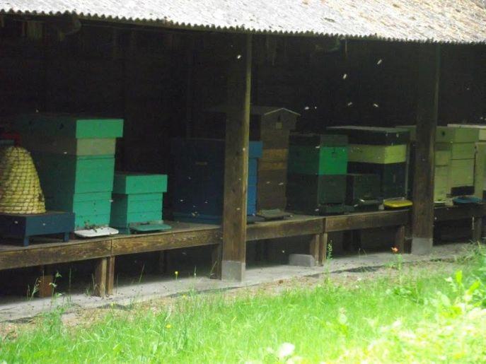 bijen 4